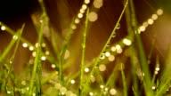 Grass in The Rain video