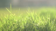 Grass In The Wind Slow video