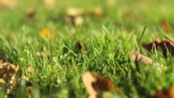 Grass in wind video