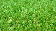 Grass Lawn Detail, shallow depth of field video