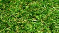 Grass Lawn Detail video