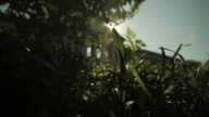 Grass Lawn with narrow depth of field video