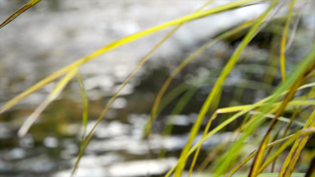 Grass near water. Close up video
