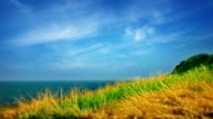 Grass, sea and sky video
