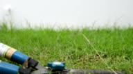 HD - Grass shear video