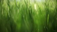 Grass, slow panorama video