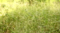Grass swaying on meadow video