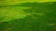 Grass texture video