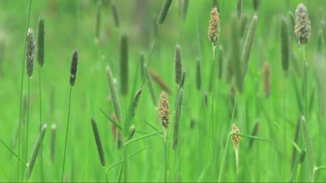 Grass video