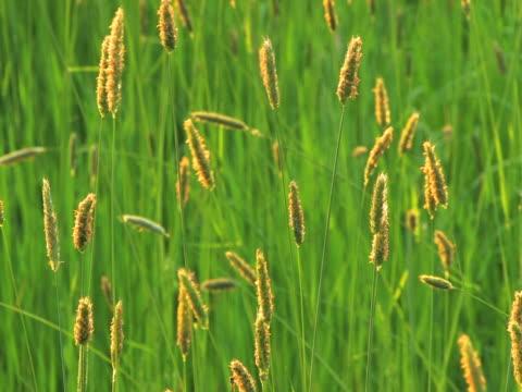 NTSC: Grass video