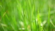 Grass. video