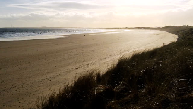Grass waves, Sea and shore of a lonely sandy beach video