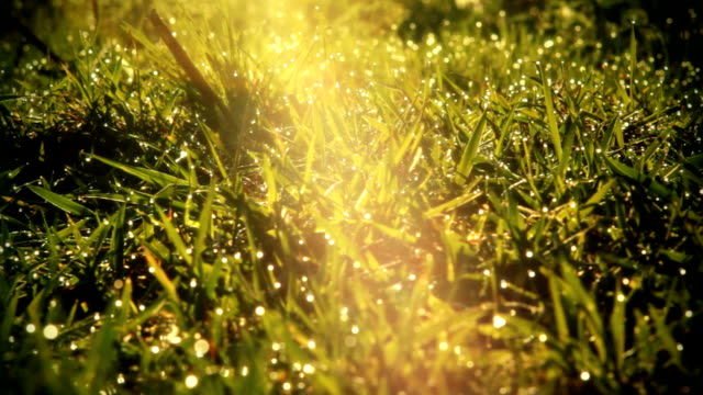 Grass With Dew Macro Bokeh Background video