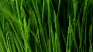 Grass With Splashes of Water video