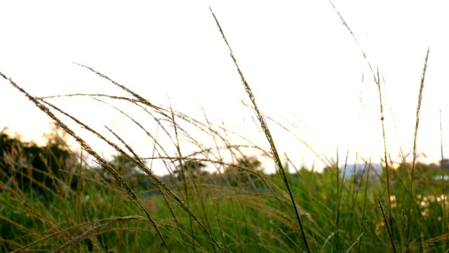 grass with sunset background video