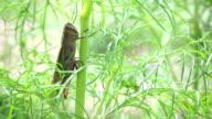 grasshopper clinging on blown green plant video