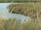 Grassy Marsh video
