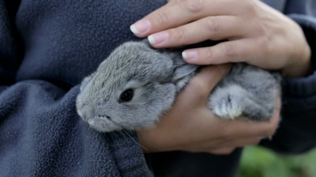 Gray fluffy rabbit in the hands of a girl video