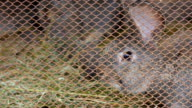 Gray rabbit hare in a mesh metal cage. video