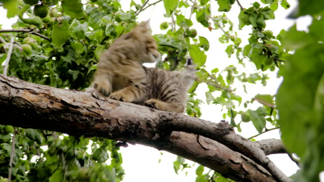 Gray striped kitten playing in the tree. Clip in 4K video
