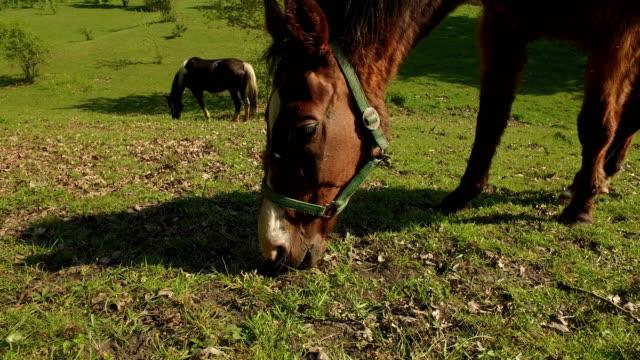 grazing horses video