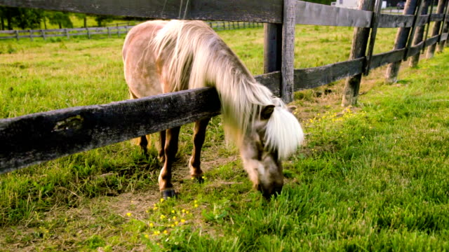 Grazing pony video