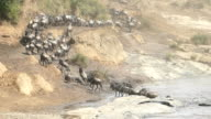 Great Wildebeest Migration in Kenya video