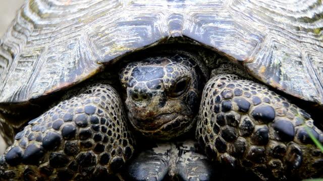 Greek tortoise video