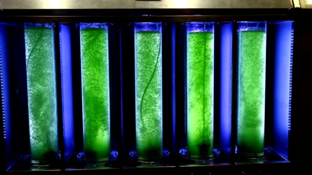 green alga in glass tube video
