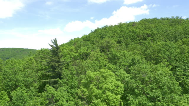 AERIAL Green and dense forest overflight video