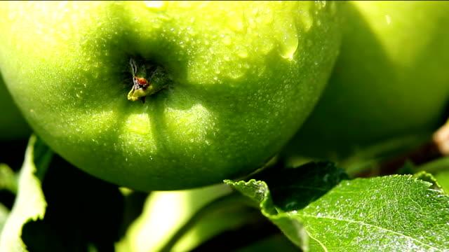 Green Apple. Close Up. video