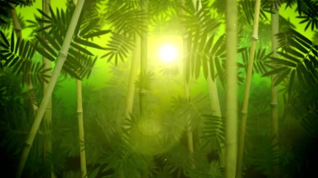 Green bamboo grove loop video