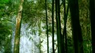 Green Bamboo on Tropical Waterfall video