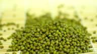 green bean seeds video