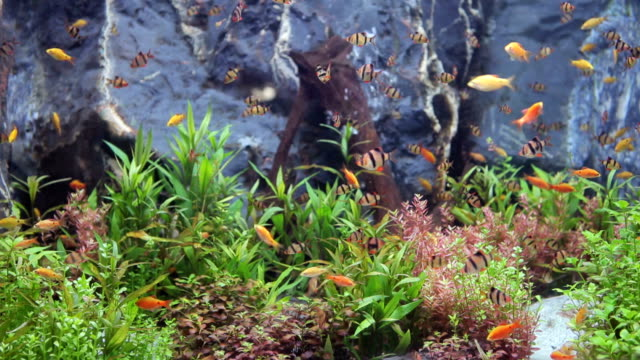 Green beautiful planted tropical freshwater aquarium with fishes video