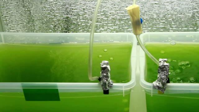 Green bubbling liquid close up video