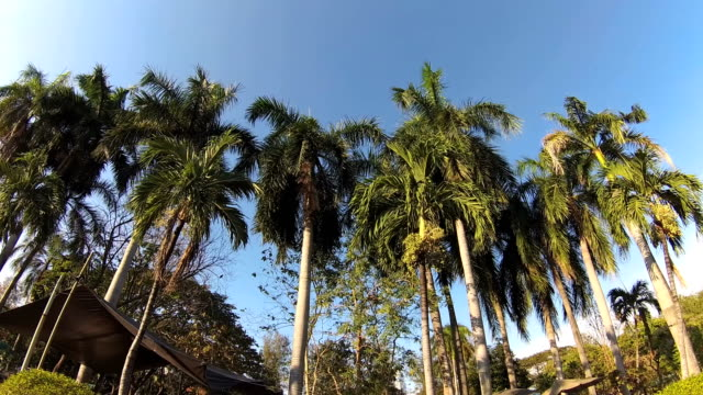 Green city park. Blue sky through palm leaves. Palm trees, people sitting on grass. Action camera video