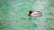 green duck video