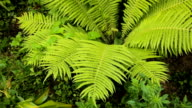 Green ferns in the forest video