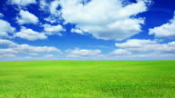 Green field and blue sky-HD video