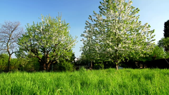 CRANE UP: Green Field and Cherry Trees video