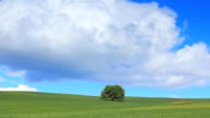 HD Green field and lonely tree - Time Lapse video