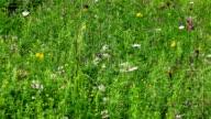 Green field flowers video