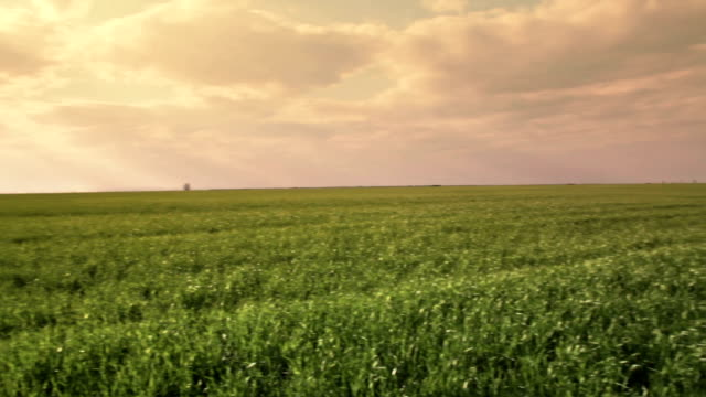 Green Field Pan video