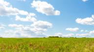 Green Field video