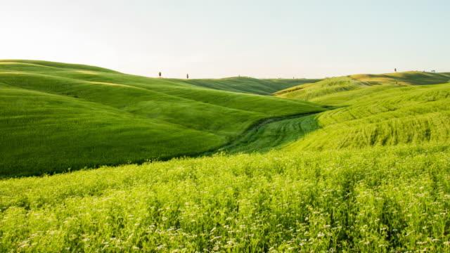 T/L Green fields in the Tuscany region video