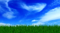 Green filed, the blue sky and white clouds video
