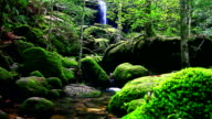 Green forest and waterfall in tropical rain forest video