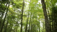 Green forest canopy video