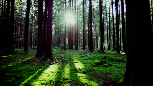 Green Forest In The Sunlight Tracking Shot video